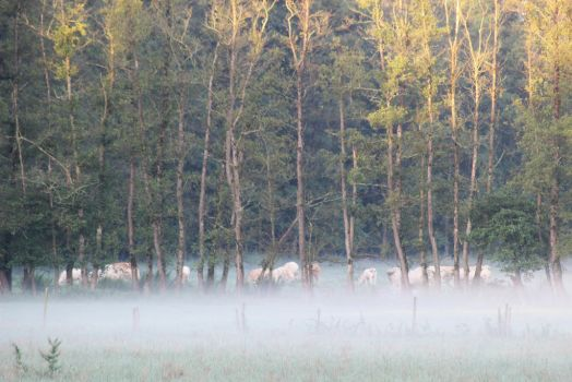 In The Morning Mist by Caillean-Photography
