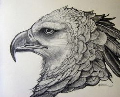 Harpy Eagle Pencil Rendering1 by HouseofChabrier