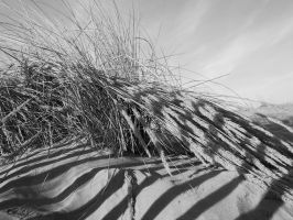 Herbes sages B and W by Mavricot
