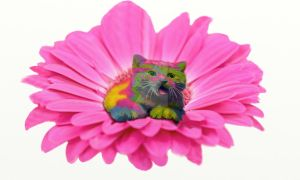 Colorful Kitty on Pink Daisy Flower by LorraineKelly