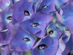 flower eyes by InsanityIsMyReality