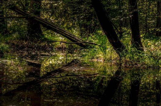 wilderness by marrciano