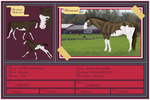 DBVR Horse Card: Suave Blanco by BVicius