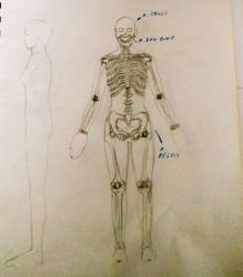 Bio Android skeletal anatomy (Old Pic) by ImperatorDavianus