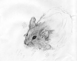 Mouse Study by Chinchikurin