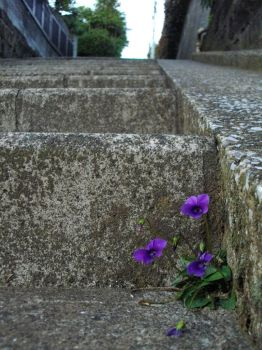Violets can't climb stairs by seyra