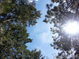 Pine Tree and  Lens Flare by JustinBHB