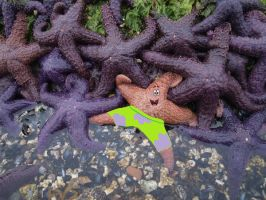 Patrick Star by sillysac