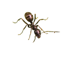 Ant PNG by Bunny-with-Camera