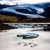 march of the ducks by cenevols