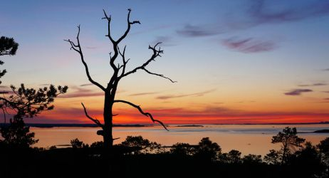 Tree Sunset Silhouette - published in newspaper by sHavYpus