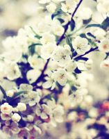 blossom my way_ by maskqueraide