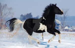 Stallion of the Snow by flickerofdoubt