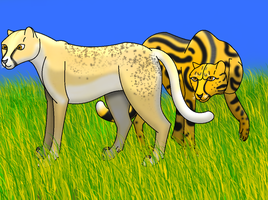 King Cheetah and a Golden Cheetah by horse14t