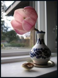 magnolia- morning window by willowleaf