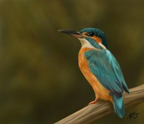 Juvenile Kingfisher by jinkies36