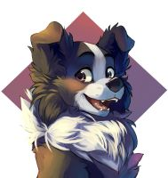 Collie by Talilly