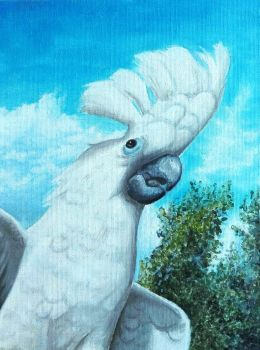 Buttons The Cockatoo by Hakuba-kun