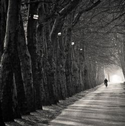 from the light by torobala