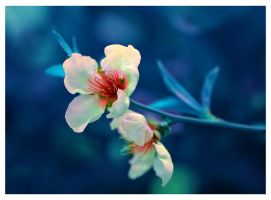 Blue elegy by Nataly1st