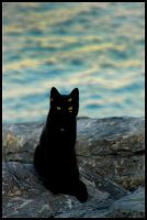 Black Cat by jacabo