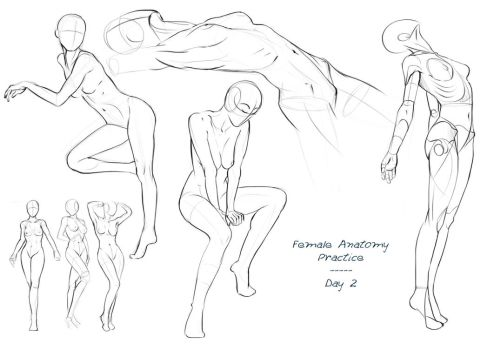 Anatomy Practice - Day 2 by Nixri