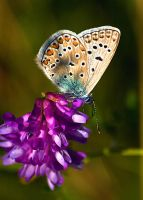 Butterfly wing by padika11
