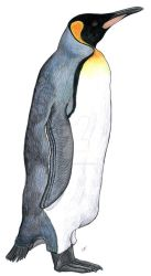 King penguin by PaleoAeolos