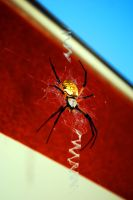 All American Spider by SublimeBudd