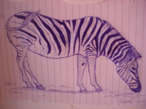 zebra by nadinedavid