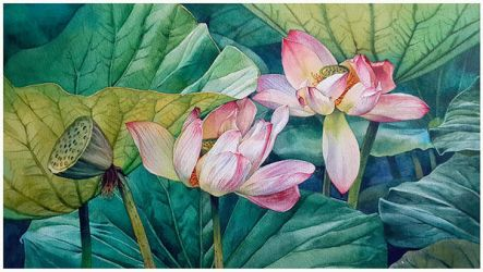 Lotuses by Takir