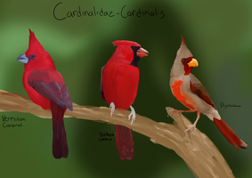 Cardinalidae by ringette-and-riding