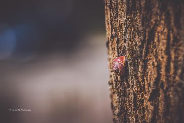 Am Baum by Tb--Photography