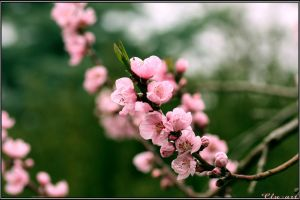 Spring Moments 08 by Clu-art