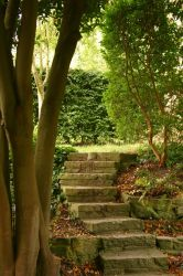 Chalice Well Steps 2 by FoxStox