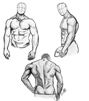 Torso Studies by Striped-Stocking