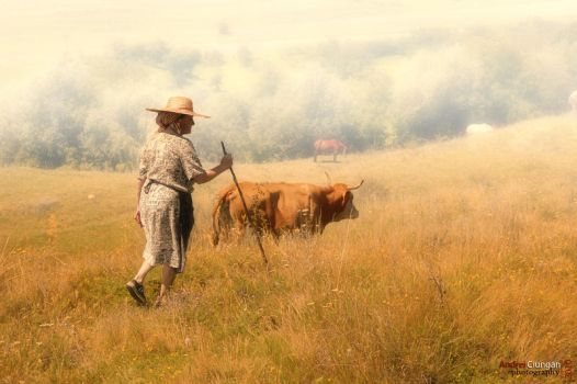 Grazing by andreiciungan