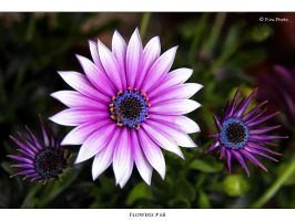 Flowers_68 by Marcello-Paoli