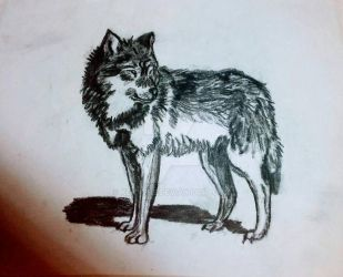 Quick Charcoal Wolf by Xenythe