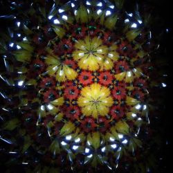 Kaleidoscope Flowers II by TheDreamsOfTheAges