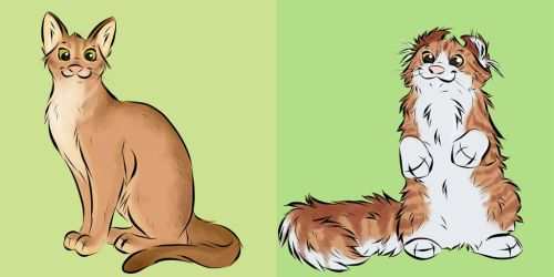 A-Z of Cats Abyssinian and American Curl by Davuu