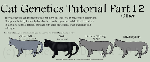 Cat Genetics Tutorial Part 12 (Other) by Spotted-Tabby-Cat