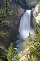 Yellowstone River Falls lower falls by swashbuckler