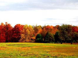 Property Line in Fall Splendor by deep-south-mele