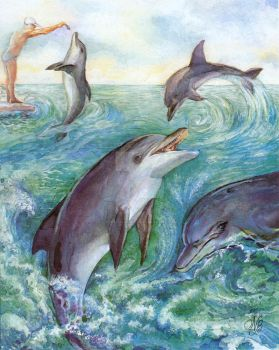 Dolphins by bermanatalie