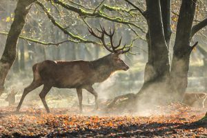 Red Deer 13 by landkeks-stock