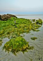 Green by Baher-Amin