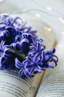 Blue hyacinth by Focus-On-Me-Photo