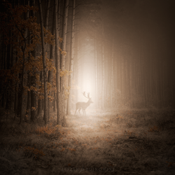 Mystic forest by Alshain4