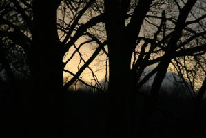 Sunset Through Trees by Haxonite